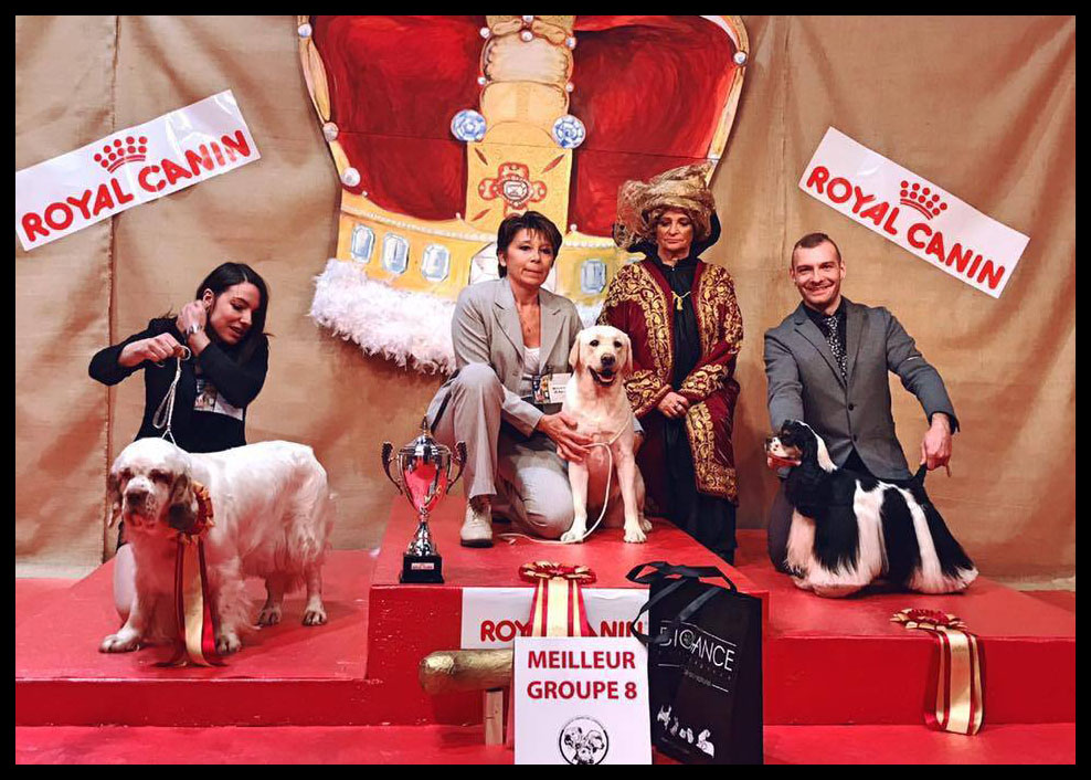 classe puppy concours canin